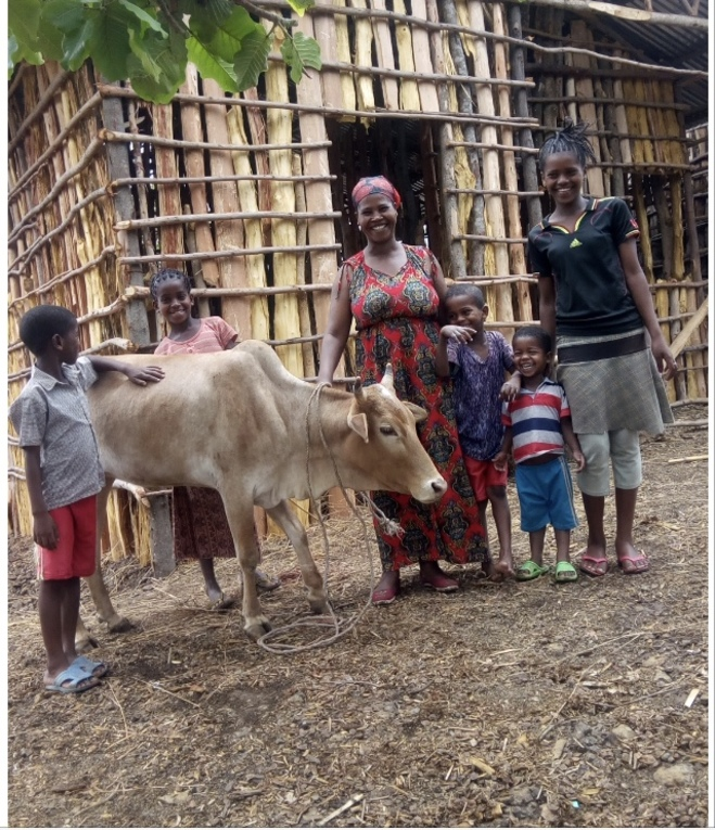 Holy Cow! (an income generating effort in Ethiopia)