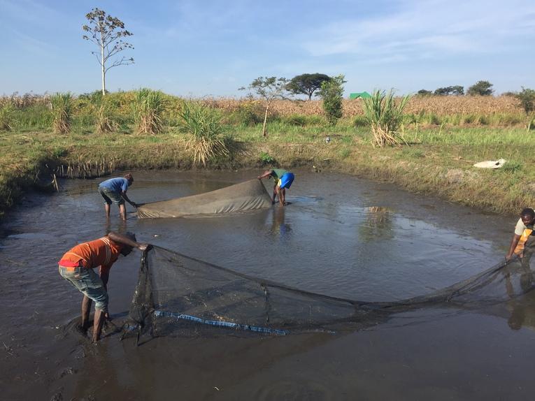 Central Africa Farming