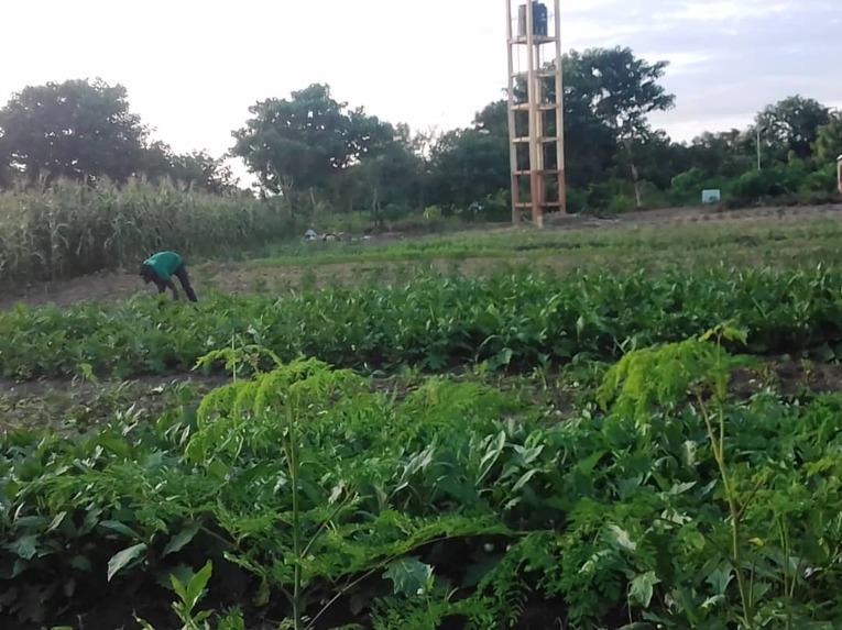 Niger Agriculture Project - Kantchari